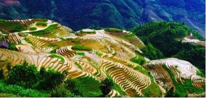 Long Ji Rice Terraced fields